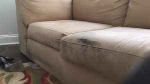 Upholstery cleaning The Hills